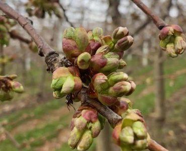 L'azienda agricola e la primavera